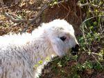 В Армении запретят пугать животных