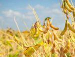 Армения обеспечит Россию сельcкохозяйственными товарами