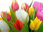 Русский букет — доставка цветов по России