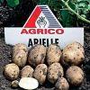 Лучшие семена картофеля по доступной цене от голландского кооператива AGRICO